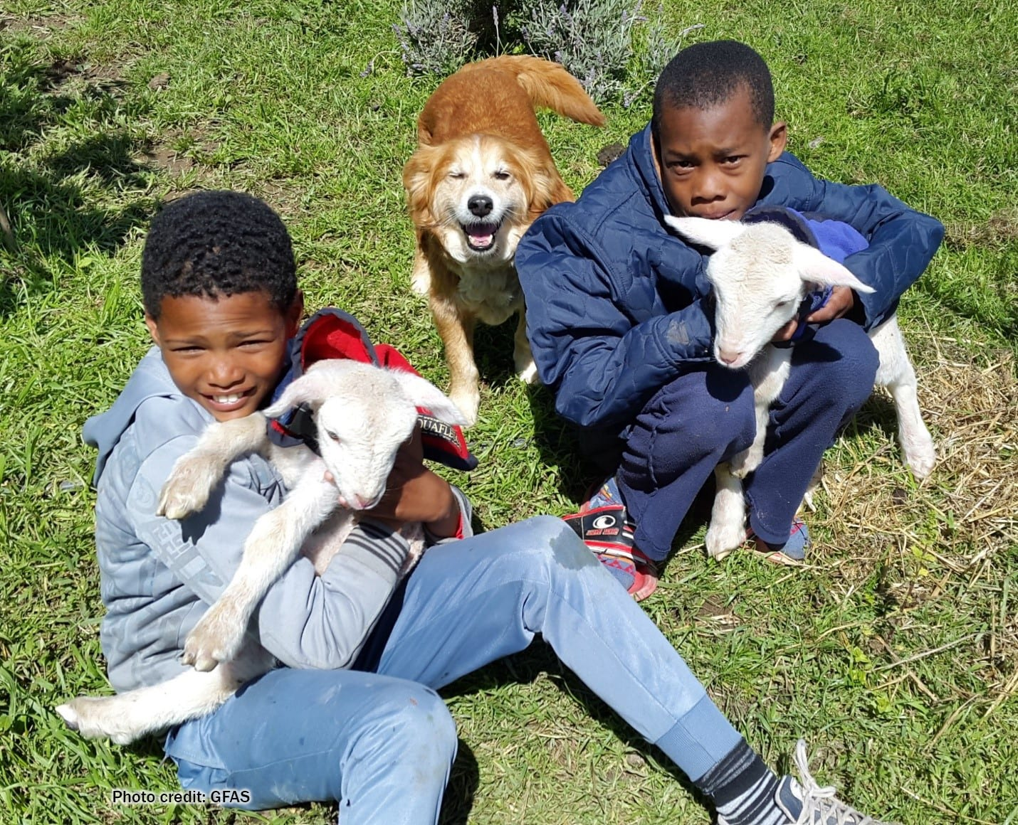 Children with dogs | Photo credit: GFAS