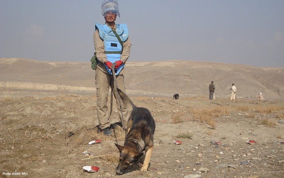 Abrams demining dog | Photo credit: MLI
