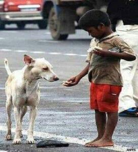 Boy feeding a street dog | Photo credit: AHPPA
