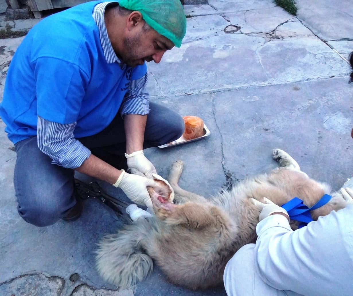 Dr. Mo Checking severely infected leg on Rufus in 2016 (Photo credit: Mayhew Afghanistan)