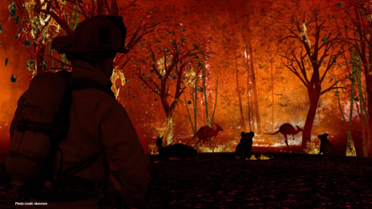 Australian firefighter and wildlife | Photo credit: bbevrem
