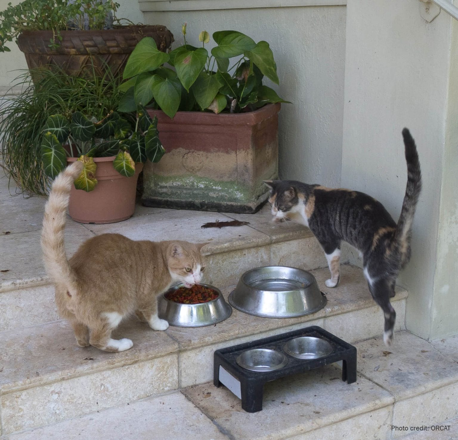 Feeding station for outdoor cats | Photo credit: ORCAT