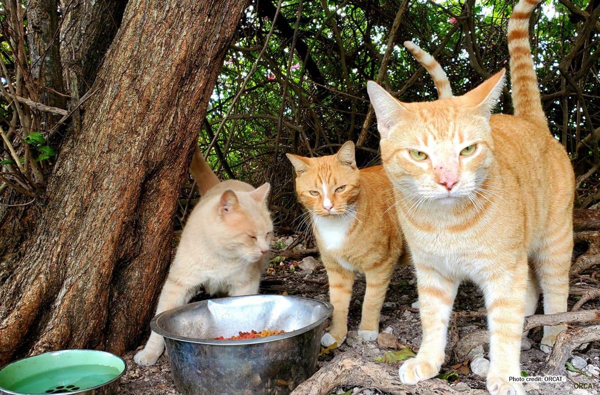 Outdoor cats   Photo credit: ORCAT