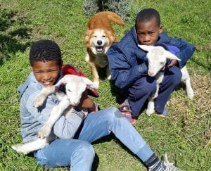 Greyton Farm Animal Sanctuary, South Africa