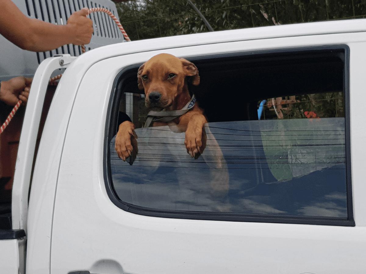 Asociación Humanitaria para la Protección Animal (Costa Rica)