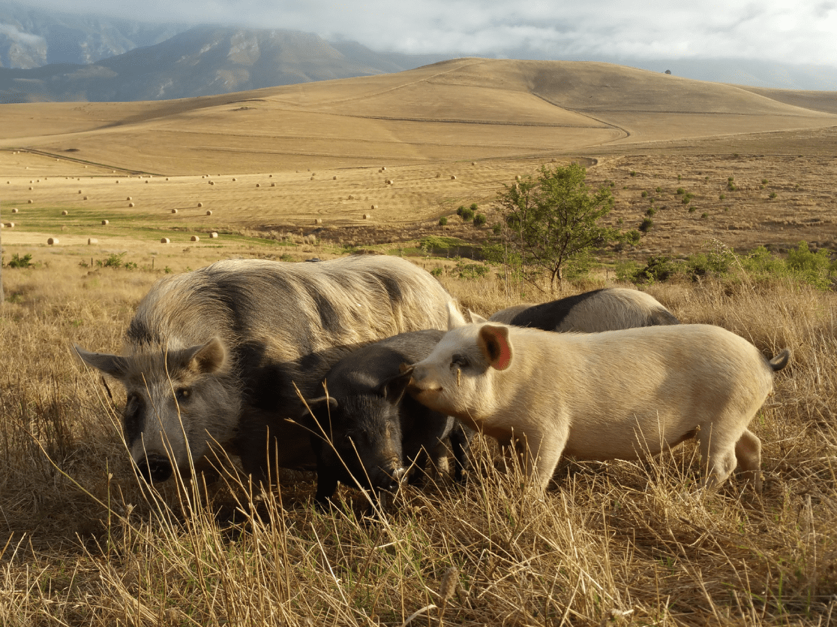 Greyton Farm Animal Sanctuary (South Africa)