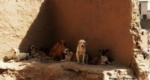 Homeless dog in a barren landscape