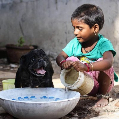 Little girl giving water to street dog