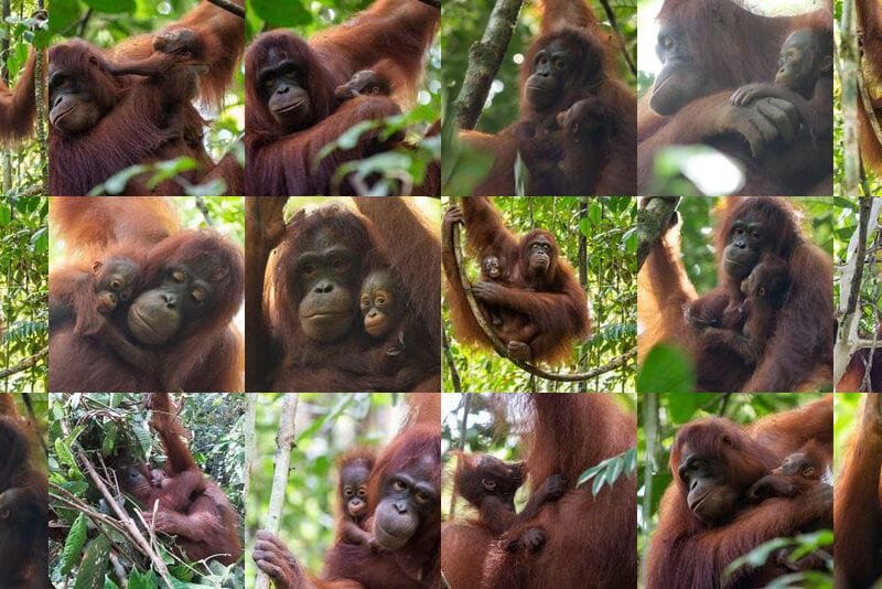 Photos of Shila and Desi and their babies.