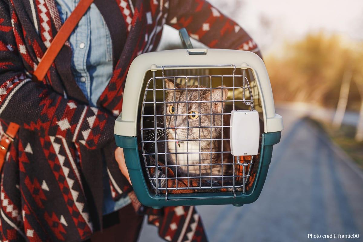 Pet cat in a crate   Photo credit: frantic00