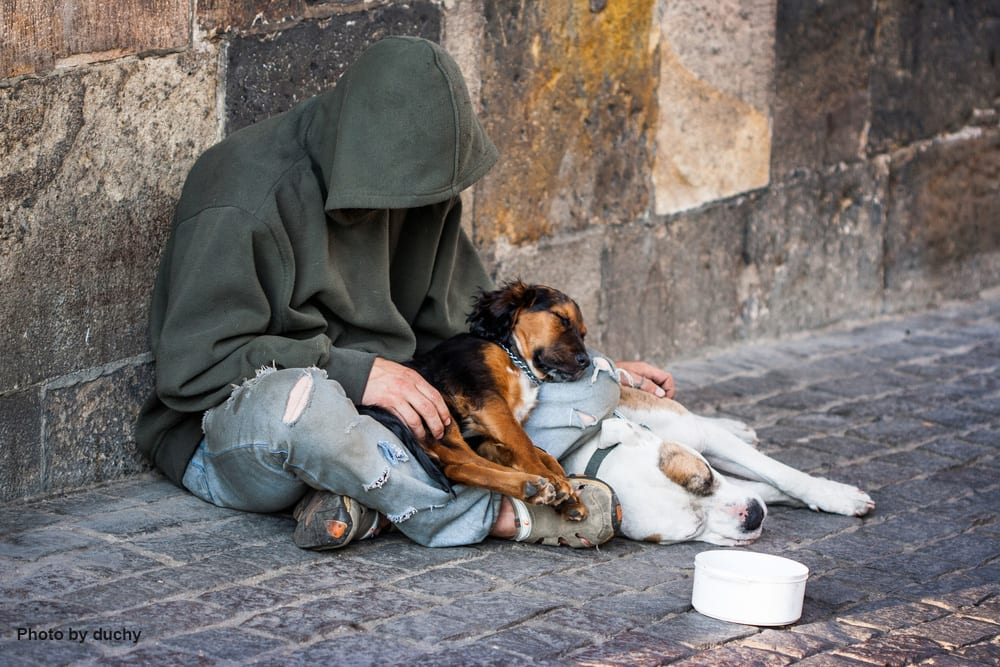 A homeless man and his pets