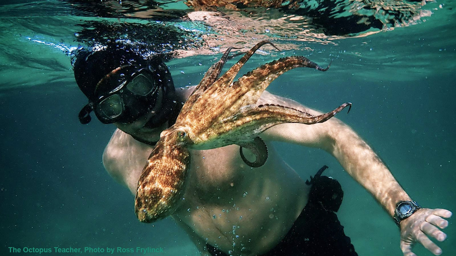 Photo of the filmmaker and the Octopus Teacher | Photo credit: Ross Frylinck