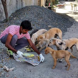 BCI_India_volunteer-feeding-dogs_295
