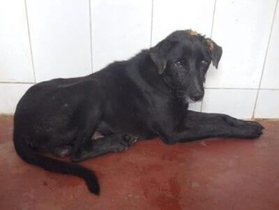 Street dog in Jaipur