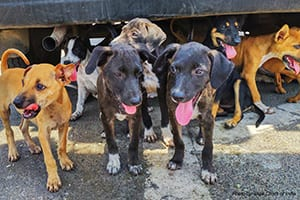 Puppies | Photo credit: Blue Cross of India