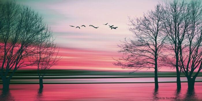 Landscape   Photo credit Eva Bidiuk