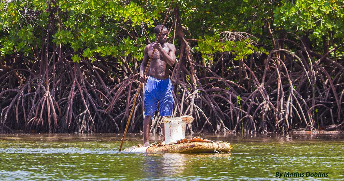 Man fishing in Mangroves in Kenya