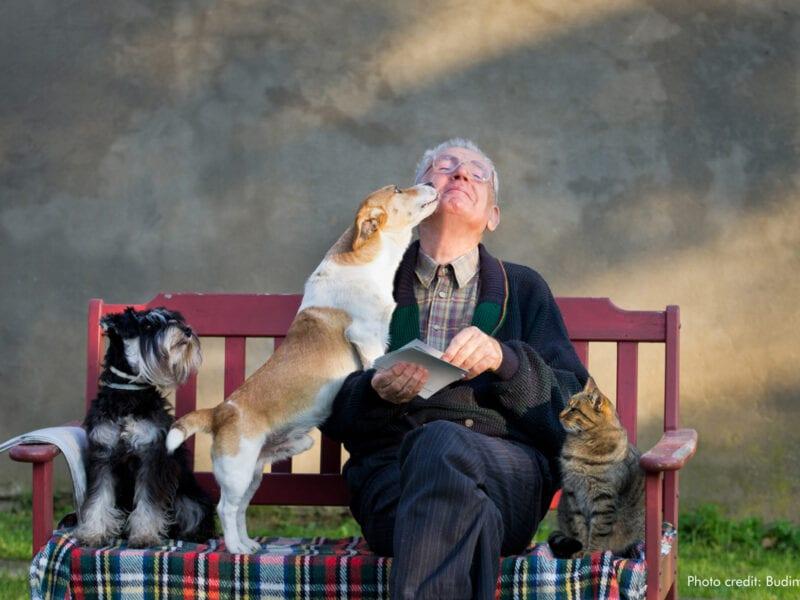 Man with dogs & cat | Photo credit: Budimir Jevtik