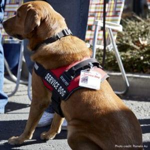 Service dog | Photo credit: Pamela Au