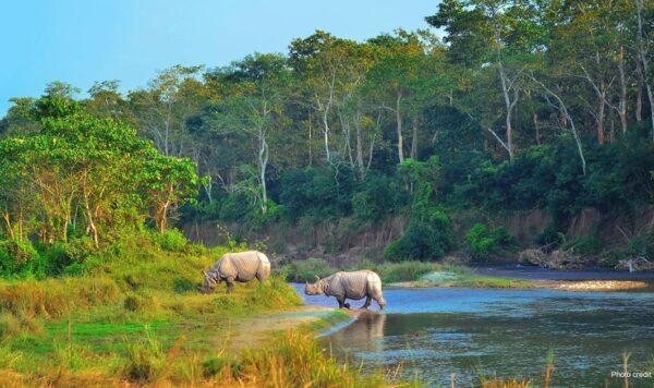 Asian Rhinos in Chiwan, Nepal   Photo credit: maroznc