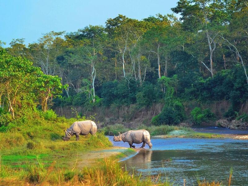 Asian Rhinos in Chiwan, Nepal | Photo credit: maroznc