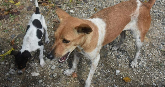 Stray dogs of Pacifica Township in Chennai, India