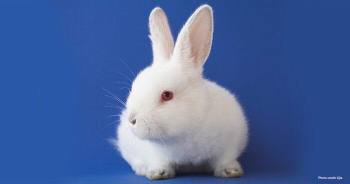 White Rabbit | Photo credit: Ejla