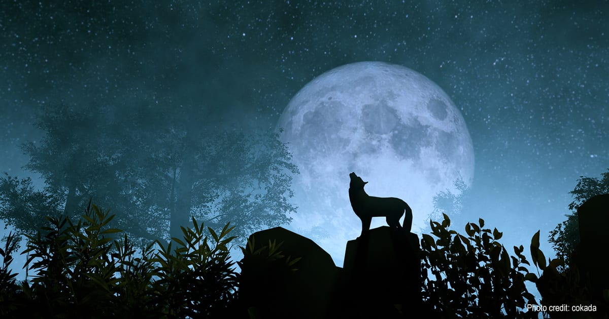 Wolf in Moon | Photo credit: cokada
