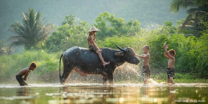 Boys with a river buffalo in Asia. | Photo credit: Poring Studio