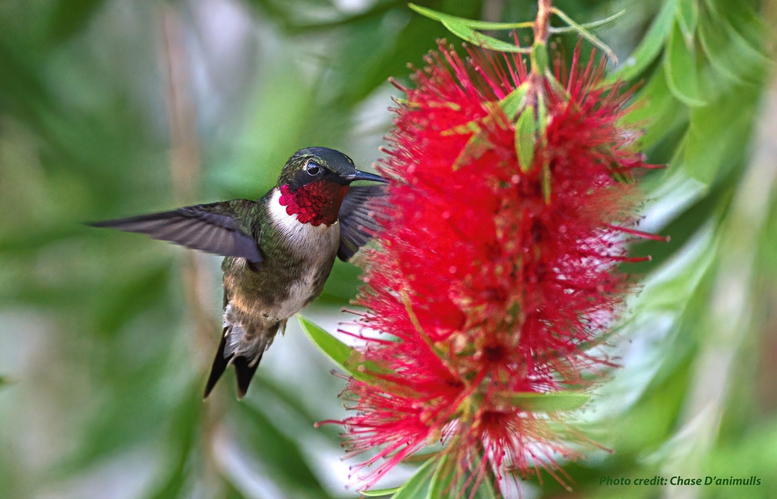 Hummingbird Travel Journal